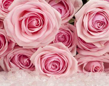 rosas_destaque