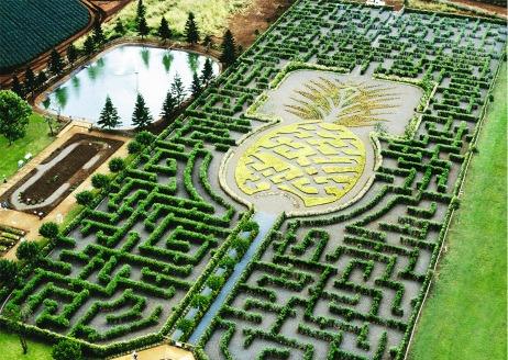 labirinto-dole-plantation-hawaii-abacaxi